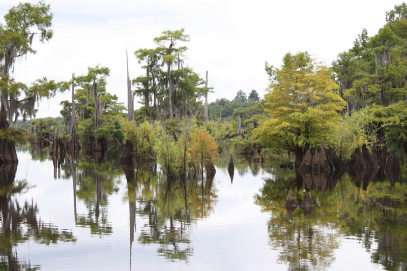 swamp lake with trees