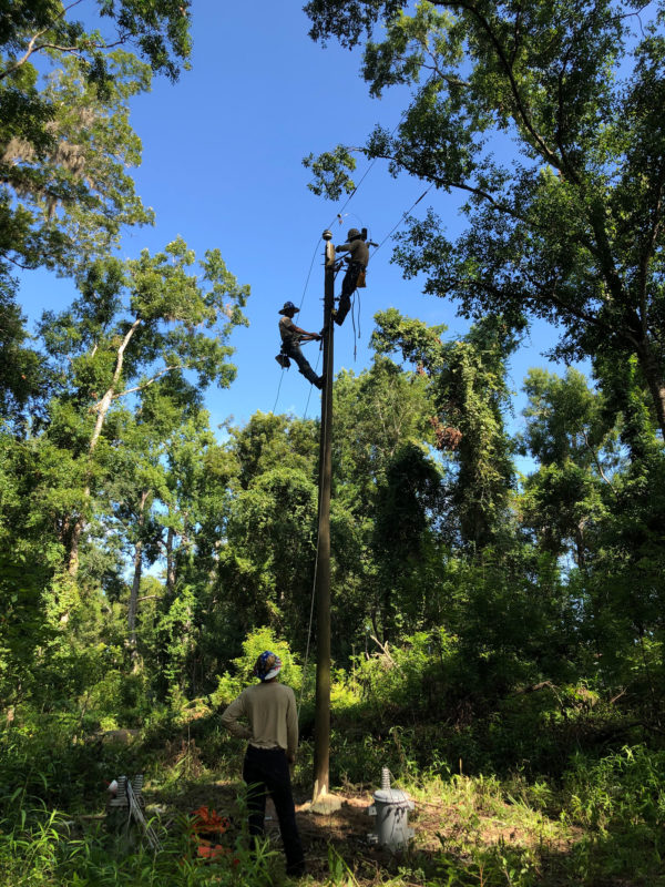 two linemen at the top of a pole surrounded by trees